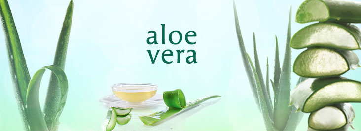 Gesichtspflege Aloevera Microsilver Körperpflege Cremes Deo Lotion Shampoo Duschgel